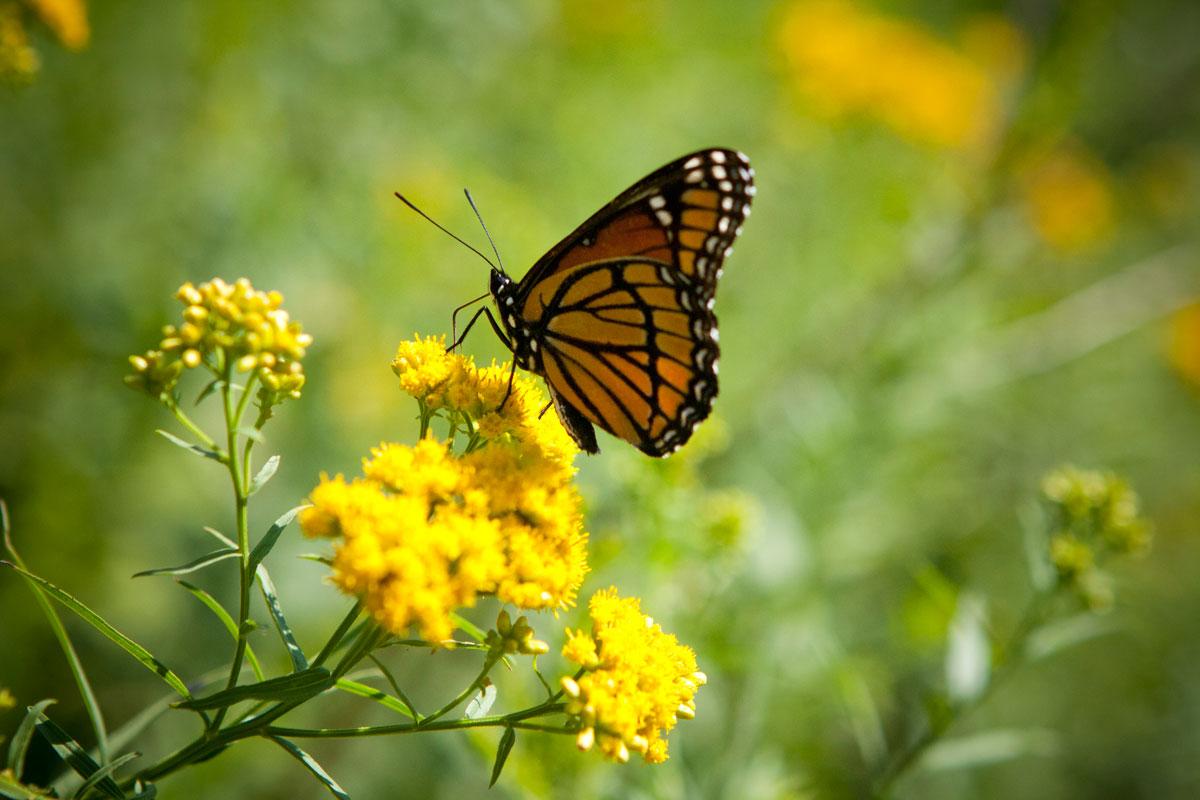 Resurrection? I'll Believe That When Caterpillars Fly: Ten Reasons To Believe In Resurrection